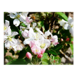Bees & Blossoms Postcard