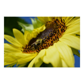 Bees Love Sunflowers Poster