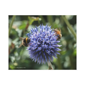 Bees on Globe Thistle Gallery Wrap Canvas