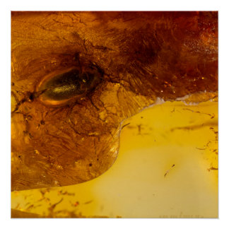 Beetle in amber