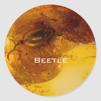 Beetle in amber round sticker