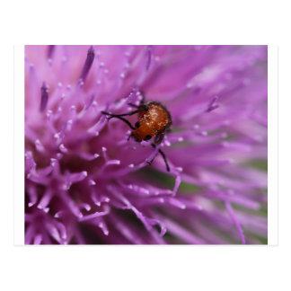 Beetle on a Milk Thistle Postcard