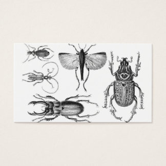 Beetles and Bugs Business Card