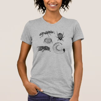 Beetles Bees Bugs and Larva Insect gray womens tee