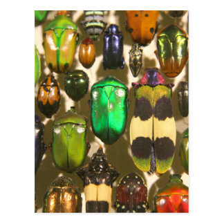 Beetles, Bugs and Insects Postcard