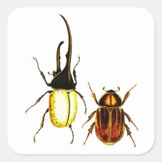 beetles bugs Entomology art stickers