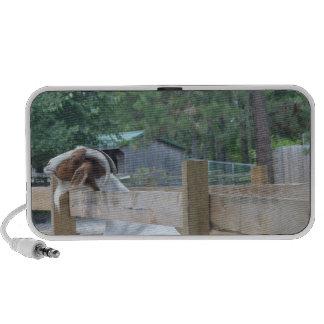 begging goat notebook speaker