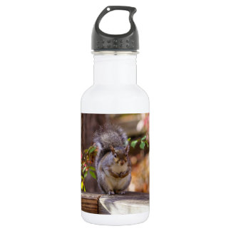 Begging Squirrel 532 Ml Water Bottle
