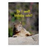 Begging Squirrel Happy Birthday Greeting Card