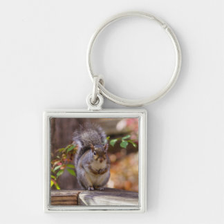 Begging Squirrel Key Ring