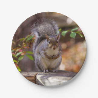 Begging Squirrel Paper Plate