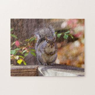 Begging Squirrel Puzzles