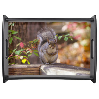 Begging Squirrel Serving Tray