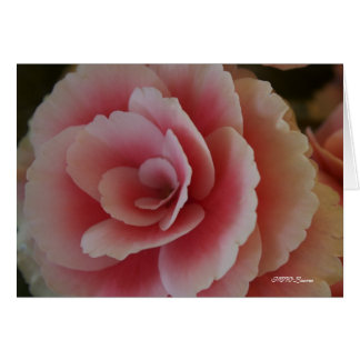 Begonia Beauty Card