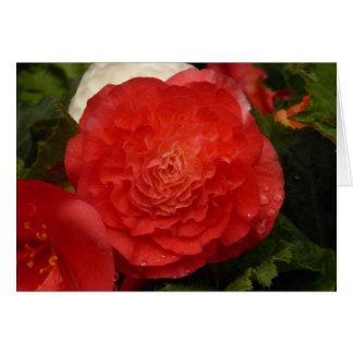 Begonia notecard