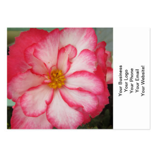 Begonia Red White Flower Bloom Business Cards