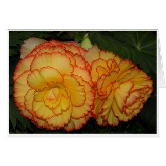 Begonias Card
