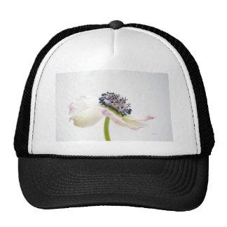 Beguile Hat