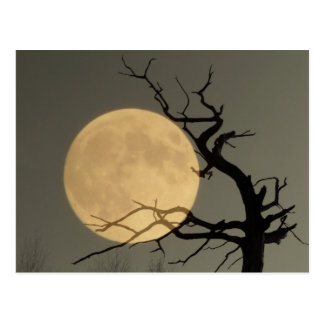 Behind - Full moon behind bare tree collage Postcard
