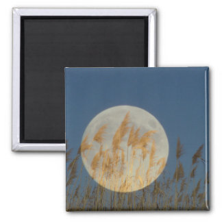 Behind - Full moon behind grass collage Square Magnet