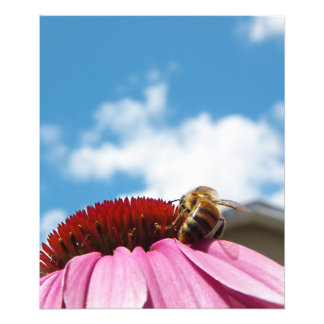 Behind the Bee Photograph
