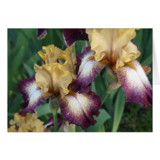 Beige and Purple Iris Greeting Cards