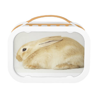 Beige bunny rabbit on white background 4 lunch box