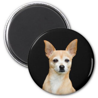 Beige painted chihuahua on black background magnet