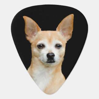 Beige painted chihuahua on black background plectrum