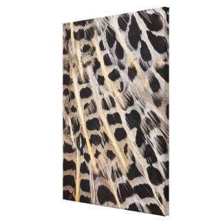 Beige Spotted Feather Abstract Canvas Print