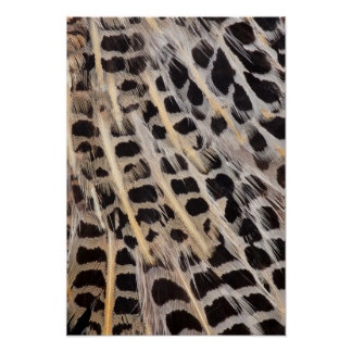 Beige Spotted Feather Abstract Poster