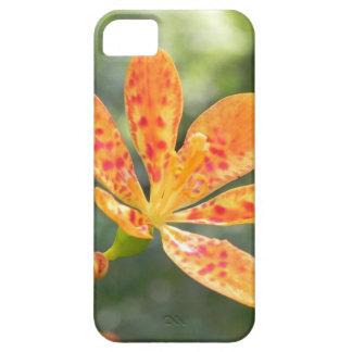 Belamcanda Chinensis Bloom iPhone 5 Cases