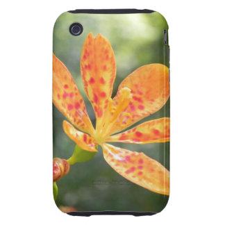 Belamcanda Chinensis Bloom iPhone 3 Tough Case