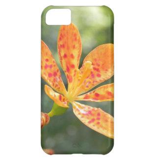 Belamcanda Chinensis Bloom iPhone 5C Case