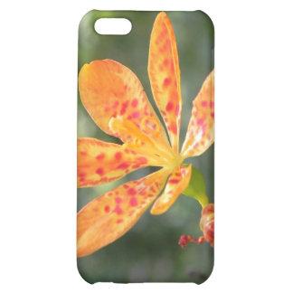 Belamcanda Chinensis Bloom iPhone 5C Cover