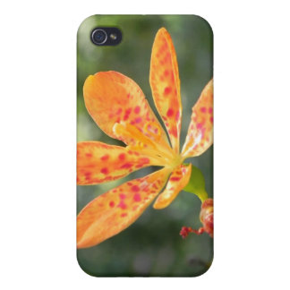 Belamcanda Chinensis Bloom Covers For iPhone 4