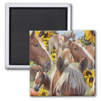 Belgian Draft Horse Collage Magnet