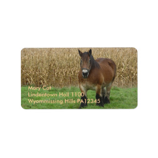 Belgian Draft Horse-in front of a corn field Label