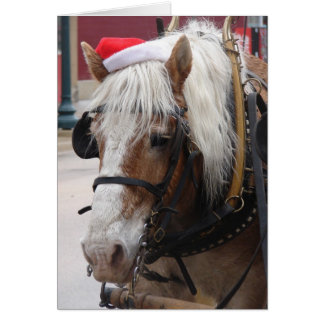 Belgian Draught   Horse Christmas Greeting Card