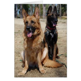 Belgian Malinois and German Shepherd Card