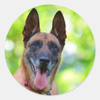 Belgian Malinois dog lovers photo round stickers