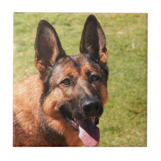 Belgian Malinois German Shepherd Ceramic Tile