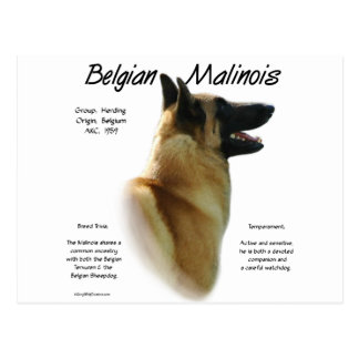 Belgian Malinois History Design Postcard