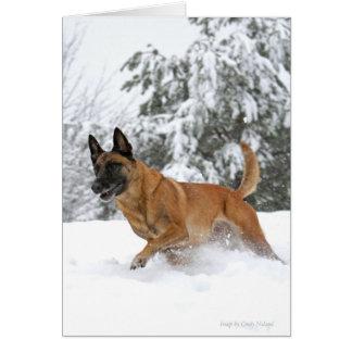 Belgian Malinois in Snow Greeting Card