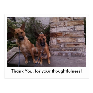 Belgian Malinois postcard.  Rest and be thankful. Postcard