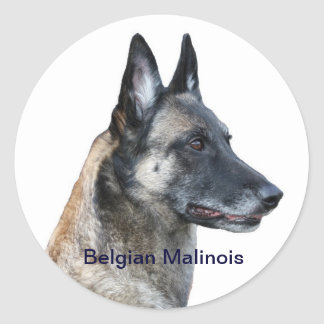 Belgian Malinois Sticker