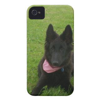 Belgian Shepherd Groenendael Puppy iPhone 4 Case