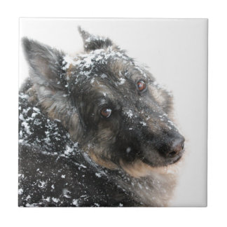 Belgian Shepherd in Snow Ceramic Tile