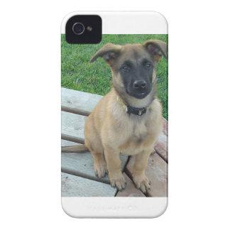 Belgian Shepherd Malinois Dog iPhone 4 Covers