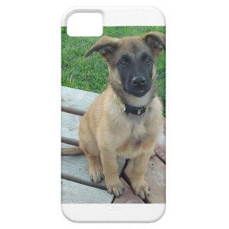 Belgian Shepherd Malinois Dog iPhone 5 Covers